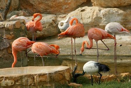 экскурсии по Кипру парк птиц в Пафосе