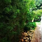dom-v-sotire-ayia-kipr-garden4